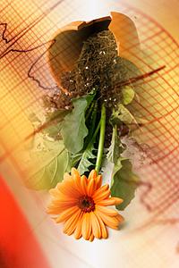 Открытие Бакстера - растения обладают памятью